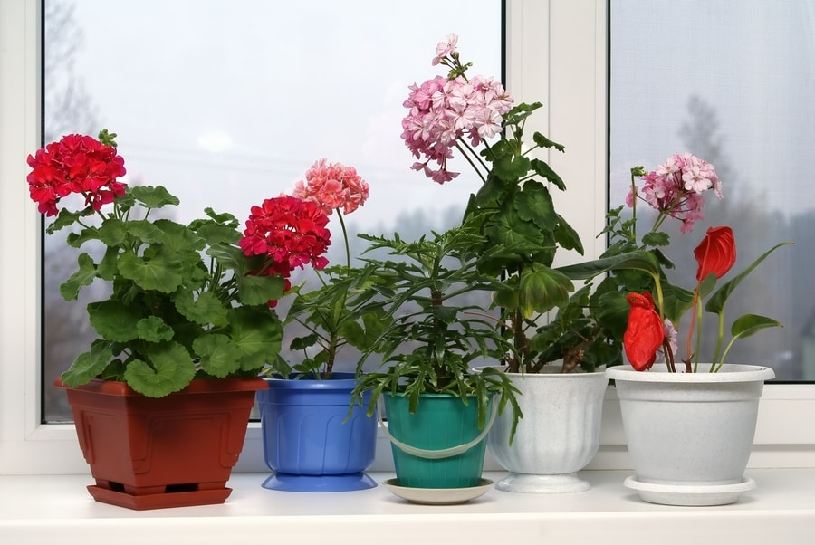 Best Indoor Flowers for Beginners